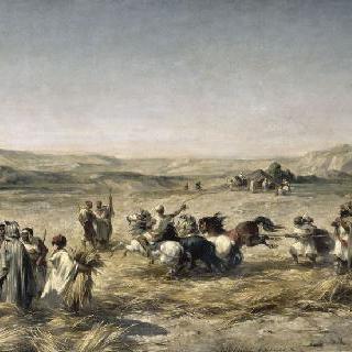 알제리의 밀 탈곡