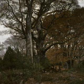겨울 내 숲 속