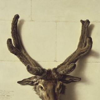 돌담 위 이상한 사슴 숲