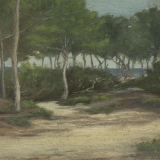 바닷가 소나무 숲