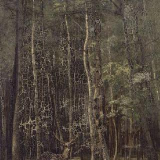 퐁텐블로 숲 : 자작나무와 소나무