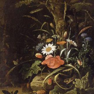 꽃, 새, 곤충과 파충류들
