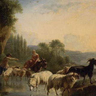 물가의 양떼들