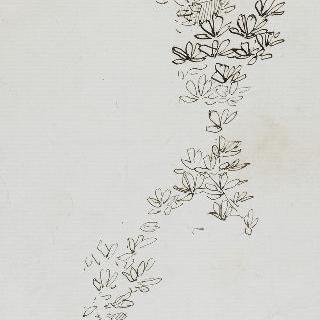 무성한 잎사귀 습작