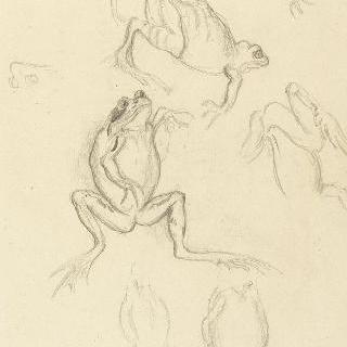 개구리 습작