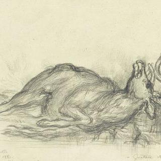 누워있는 사슴