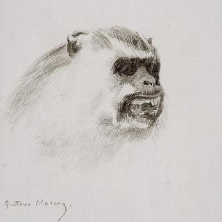 원숭이의 머리