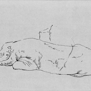 누워있는 돼지