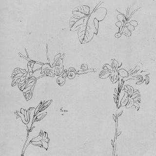 습작 종이 : 백합과 무화과 나무