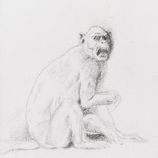원숭이 습작