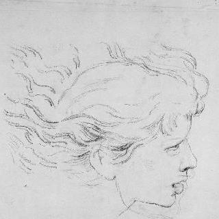 라파엘로풍의 복제화 (신전에서 쫒겨나는 헬리오도루스, 천사 두상의 세부 묘사, 바티칸)