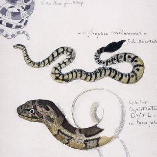 헤라클레스와 히드라의 물뱀 습작 종이
