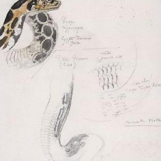 히드라의 물뱀 습작 종이