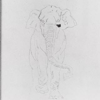 실물 코끼리