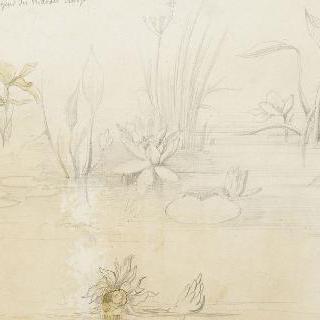 물가의 식물들 습작, 개구리 습작 2점