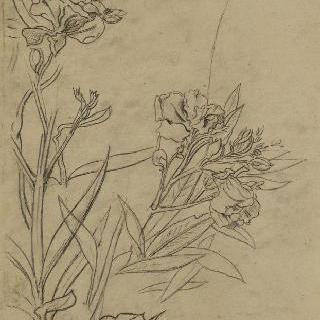 꽃이 핀 식물 습작 2점