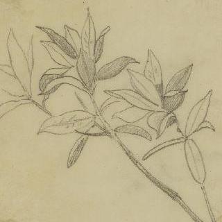 미확인 식물 습작