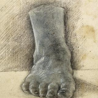 오른쪽 발의 축소판 앞모습
