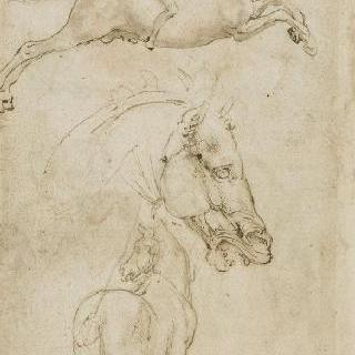 말의 얼굴과 말의 엉덩이