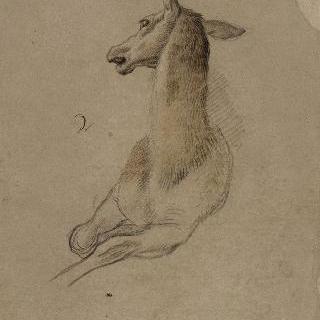 암사슴의 두상과 앞모습, 접힌 발