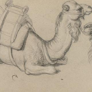 단봉 낙타들