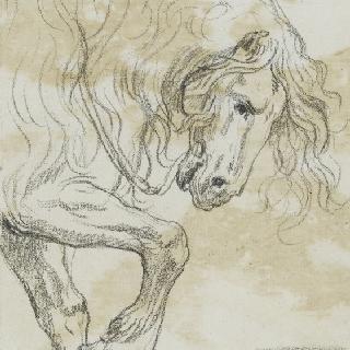 말의 앞 몸통