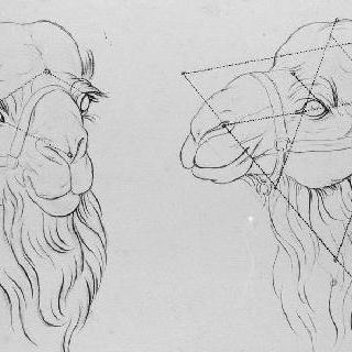 낙타의 머리 습작 2점