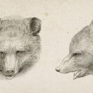 앨범 II : 곰들의 두 개의 머리