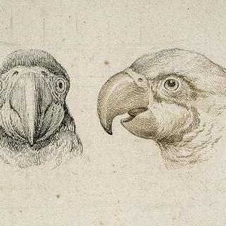 앵무새의 두 개의 머리