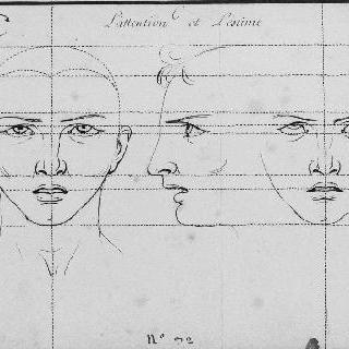 주의력과 존중 : 정면과 측면의 두상