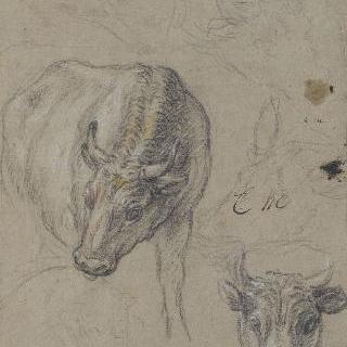 네 마리의 소와 한 마리의 양