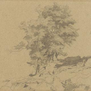 로마의 평야 : 거대한 바위 위의 나무들의 총림