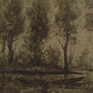 풍경 : 강가의 나무들