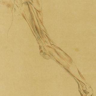 발과 다리의 근육