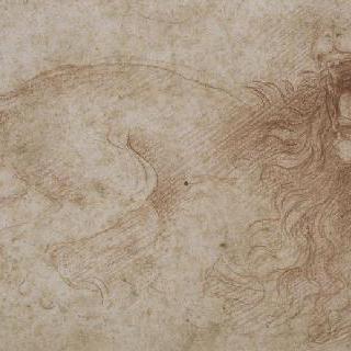 얼굴을 붉히는 사자
