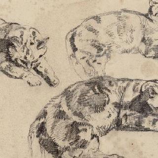 머리는 오른쪽을 향하고 누워 있는 고양이들에 대한 세 습작