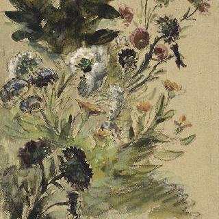 꽃 습작 : 금잔화, 수국, 과꽃 ; 1840-1850