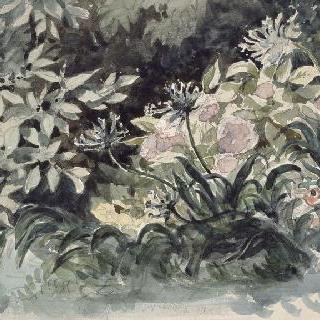 분홍 수국 파란 스킬레스 붉은 아네모네가 있는 꽃밭 ; 1842-1849