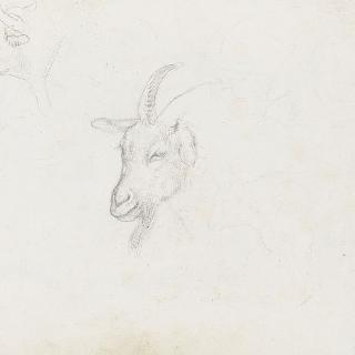 앨범 : 소과 동물 두상 ; 염소 두상 ; 잘 알아 볼 수 없는 암소 크로키
