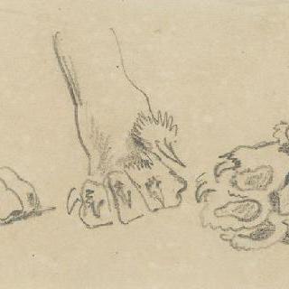 고양이과 짐승의 발에 대한 세 습작