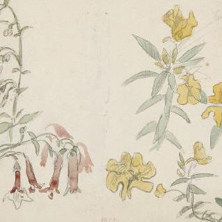 후시아스 가지가 있는 꽃 습작