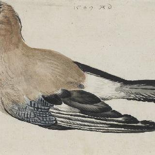 일명 호두까기라고 불리는 새