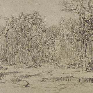 겨울의 숲