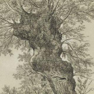 기형적인 나무 줄기의 고목 습작