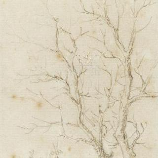 앙상한 두 나뭇가지에 나타난 잎이 무성한 잔 가지
