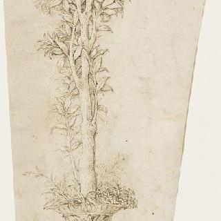 항아리와 오렌지 나뭇가지
