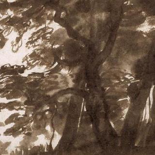 역광 아래의 나무들 군상
