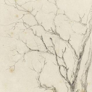 잎이 떨어진 나뭇가지