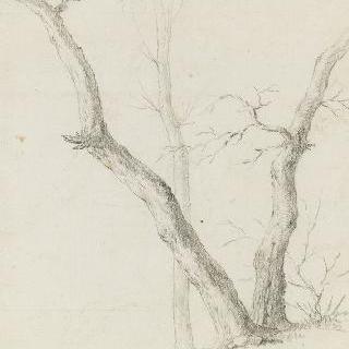 나뭇잎이 떨어진 세 그루의 나무들 습작