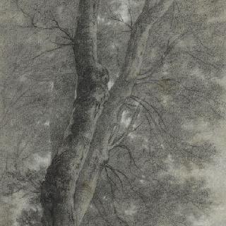 커다란 나무 근처의 남자